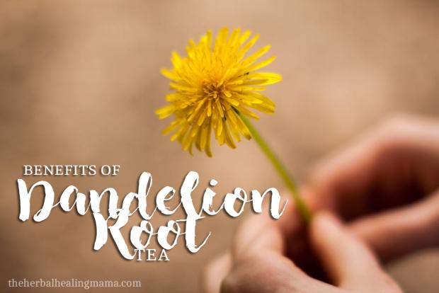 Benefits of Dandelion Root Tea