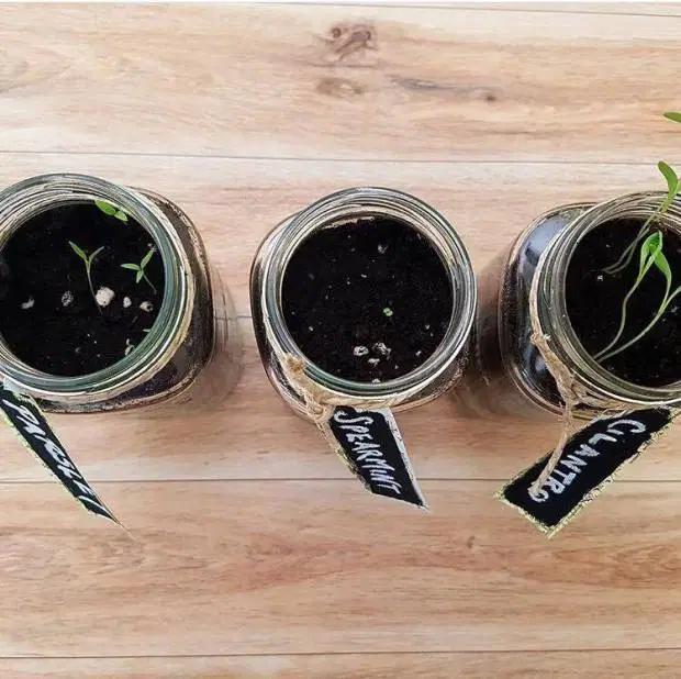 Creating a Windowsill Herb Garden